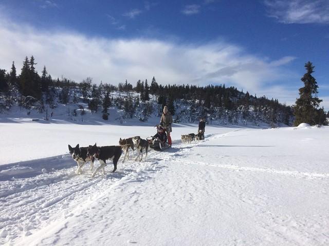 Hundekjøring i dag fra kl. 1400 vil berøre løypenettet mellom Danebu og Storstølen...